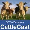 CattleCast artwork