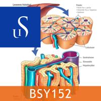 BSY152 - Sykepleiens naturvitenskapelige og medisinske grunnlag podcast