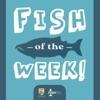 Fish of the Week! artwork