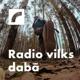 Radio vilks dabā
