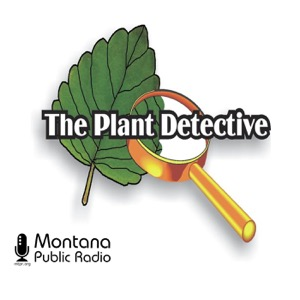 Plant Detective, The