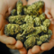 Potcasts* cannabis investing news