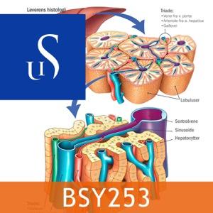 BSY253 - Sykepleiens naturvitenskapelige og medisinske grunnlag 2 Del B
