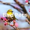 Bird Pets artwork