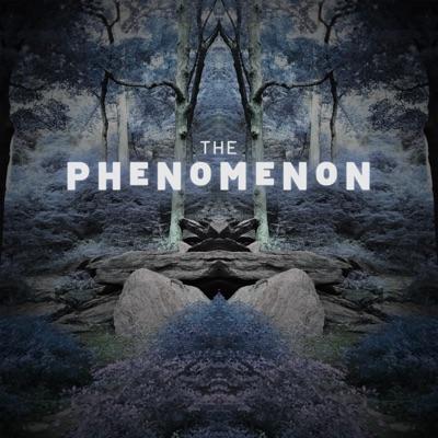 The Phenomenon:Luciola Creative