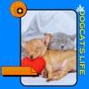 Dogcat's Life  artwork