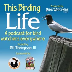 This Birding Life (Enhanced)