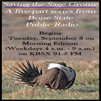Saving the Sage Grouse