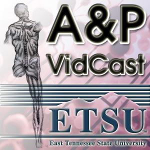 Anatomy & Physiology VidCast - Lab Videos