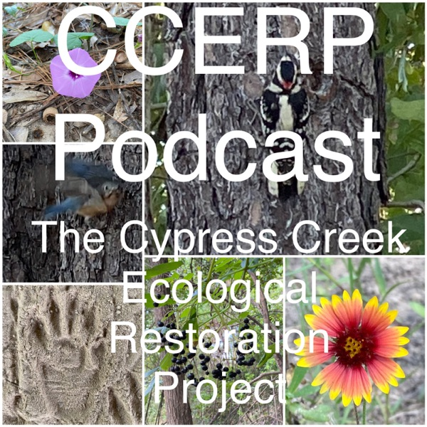 CCERP Podcast