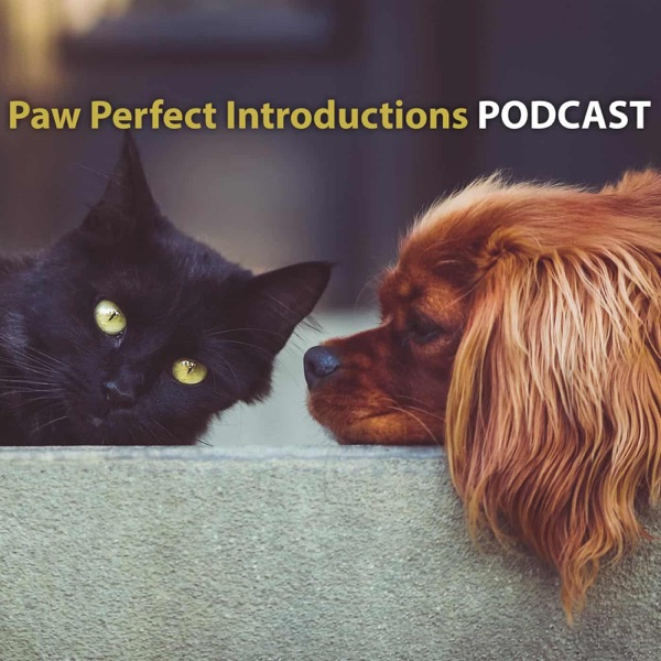 Paw Perfect Introductions