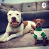 Cães Bora Brasil