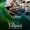 Leopard: Exploring Africa's Best Destinations artwork