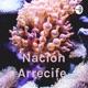 Nación Arrecife