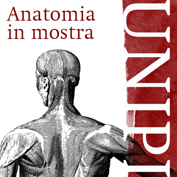 Anatomia in mostra