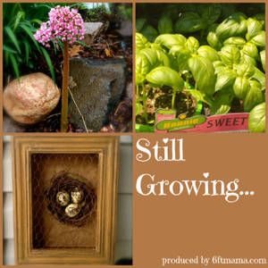 Still Growing...A Weekly Gardening Podcast