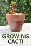 Growing Cacti