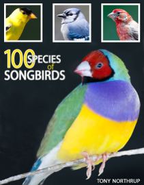 100 Species of Songbirds: A Picture Book for Bird Watchers and Lovers