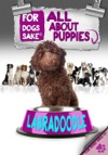All About Labradoodle Puppies