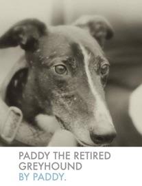 PADDY THE RETIRED GREYHOUND