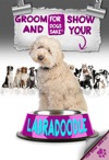 Grooming And Showing Your Labradoodle