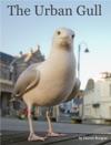 The Urban Gull