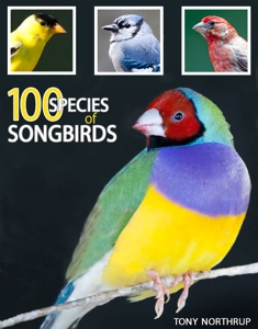 100 Species of Songbirds: A Picture Book for Bird Watchers and Lovers da Tony Northrup