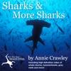 Sharks  More Sharks