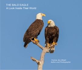 THE BALD EAGLE  A LOOK INSIDE THEIR WORLD