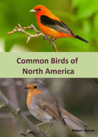 Common Birds of North America - An Illustrated Guide to 50 of the Most Common North American Birds