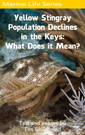 Yellow Stingray Population Declines in the Keys: What Does it Mean? book
