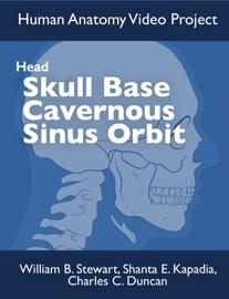 Skull Base Cavernous Sinus Orbit