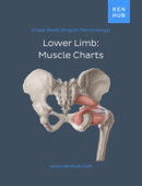 Lower Limb: Muscle Charts