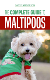The Complete Guide to Maltipoos: Everything You Need to Know Before Getting Your Maltipoo Dog