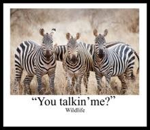 You Talkin ' Me?