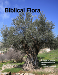 Biblical Flora