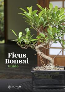 Ficus Bonsai Guide Copertina del libro