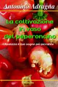 La coltivazione in vaso del peperoncino