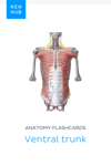 Anatomy flashcards: Ventral trunk
