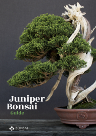 Juniper Bonsai Guide