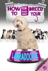 How To Breed Your Labradoodle