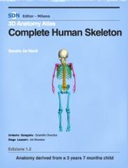 Complete Human Skeleton