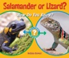 Salamander Or Lizard