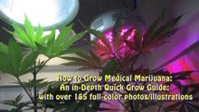 How to Grow Medical Marijuana: An in-Depth Quick Grow Guide