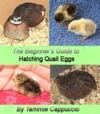 The Beginners Guide To Hatching Quail Eggs