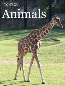 Animals Book Review