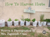 How To Harvest Herbs