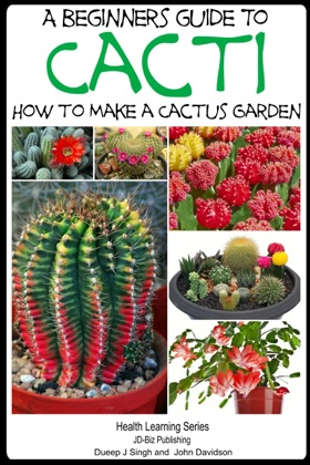 A Beginner's Guide to Cacti: How to Make a Cactus Garden image