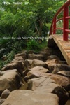 Chm Th Ca Nguyn Vn Phong