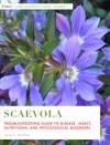 Scaevola